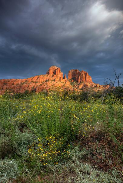 Wildflowers Growing in Arizona