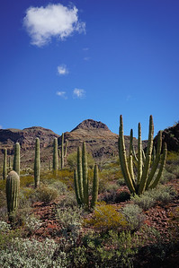 Vista at Organ Pipe Cactus National Monument