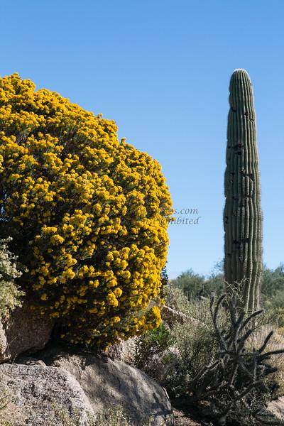 Arizona 11-13©DonnaLovelyPhotos com-0160
