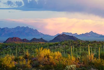 Ajo Scenic Drive, Arizona