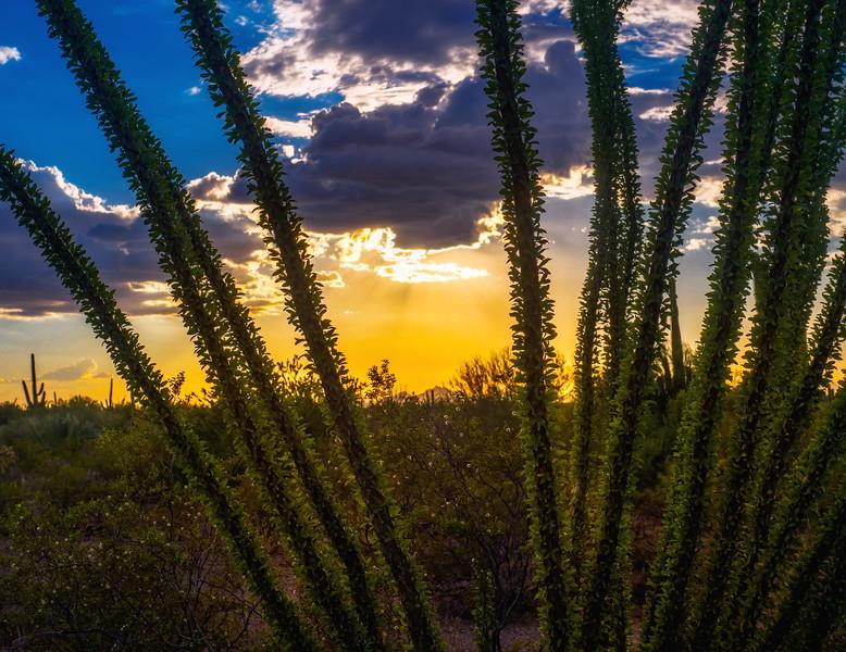 Ocotillo Sunset