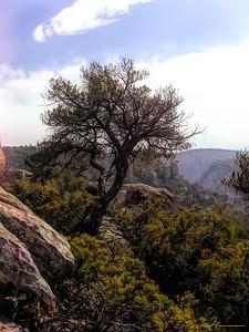 Chiricahua National Monument in AZ