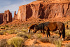 Navajo Horses in Monument VAlley