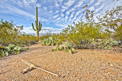 Saguara National Park, Arizona, USA