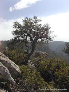 Coronado National Monument in Arizona