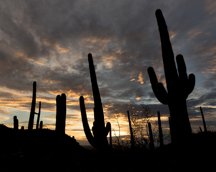 Monsoon Sunset, Saguaro National Park, AZ