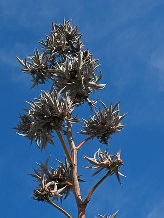 AZ-Sonora Desert Museum