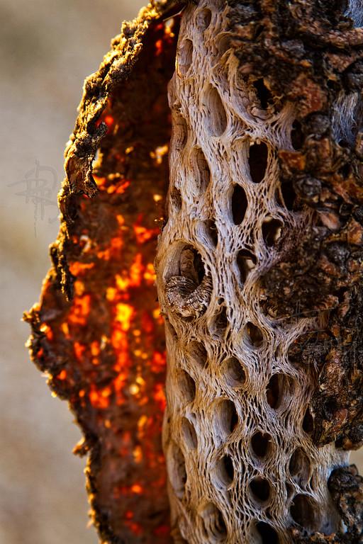 RBP IMG_6936 Saguaro National Park Dead Saguaro Cactus Tucson AZ