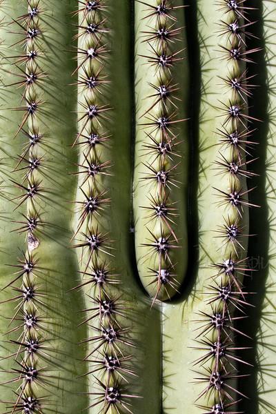 RBP IMG_6838 Saguaro National Park Saguaro Cactus Tucson AZ