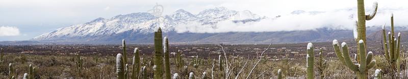 RBP IMG_8008 Saguaro National Park Catalina Mountains in Snow s