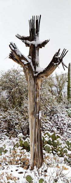RBP IMG_7998 Saguaro National Park Dead Cactus in Snow