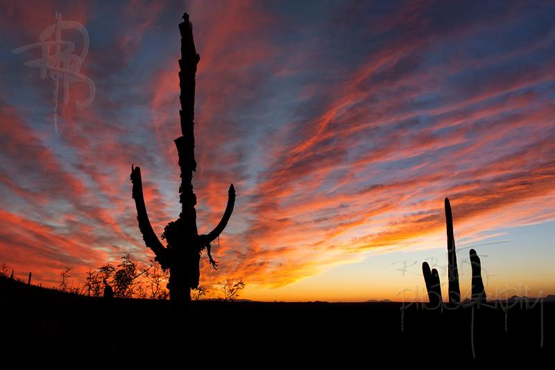 RBP IMG_7065 Saguaro National Park