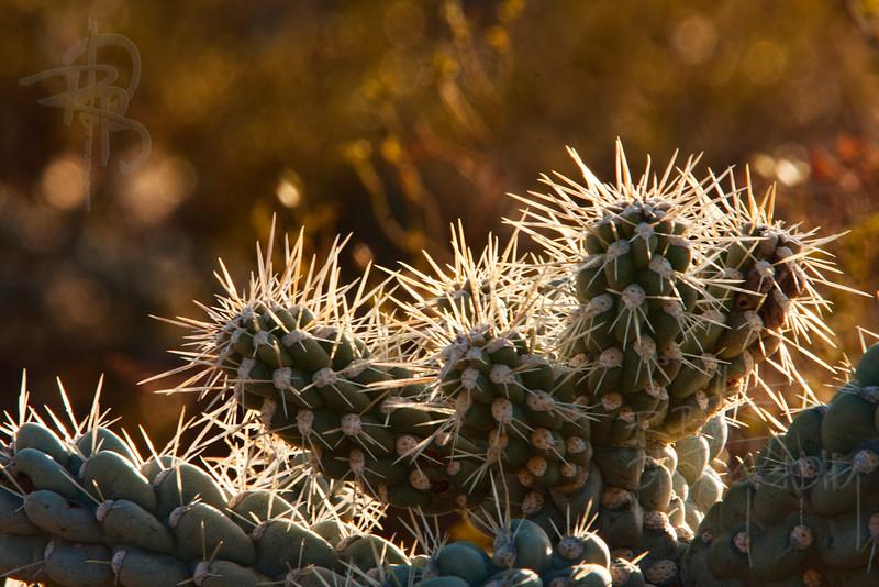 RBP IMG_1438 Saguaro National Park Cactus Tucson AZ