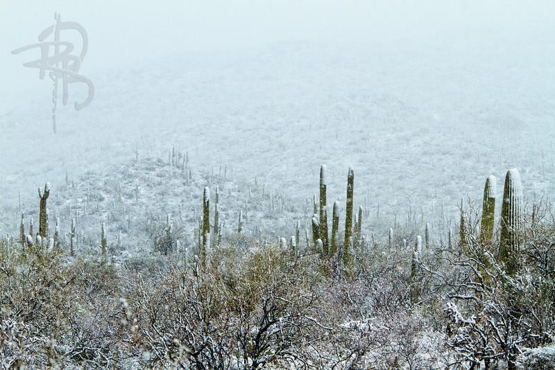 RBP IMG_7953 Saguaro National Park Snow Storm