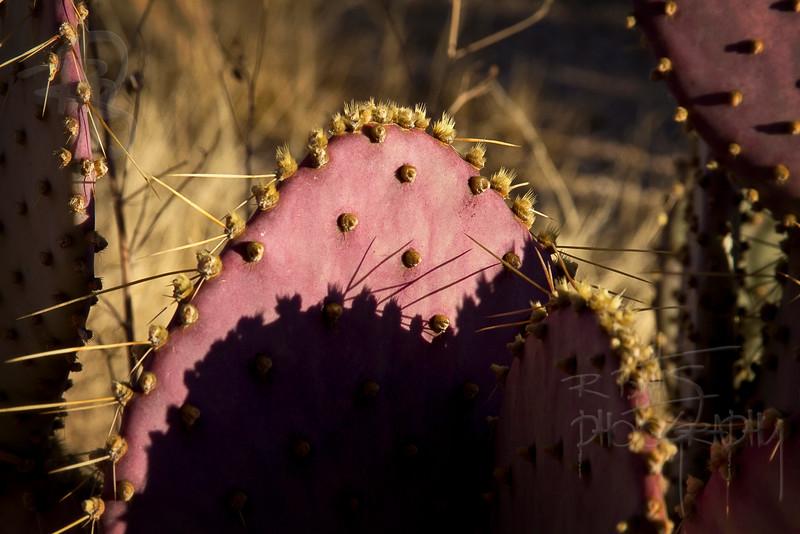 RBP IMG_0810 Pantano Wash, Tucson, AZ