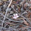Theme:  interesting things on the ground<br /> single flower among the debris