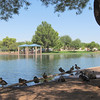 Ducks resting along the water's edge at Desert Breeze Park in Chandler