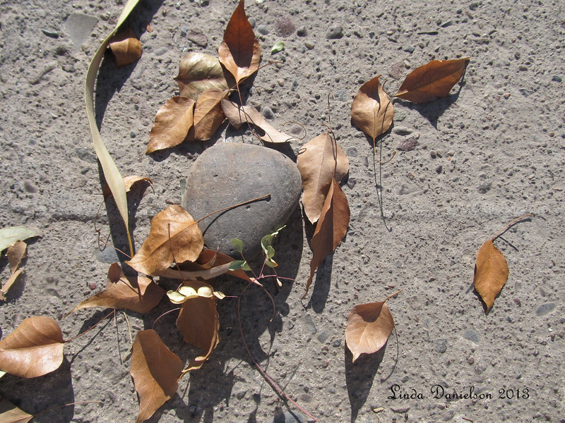 Theme: Interesting things on the ground<br /> Leaves and a rock
