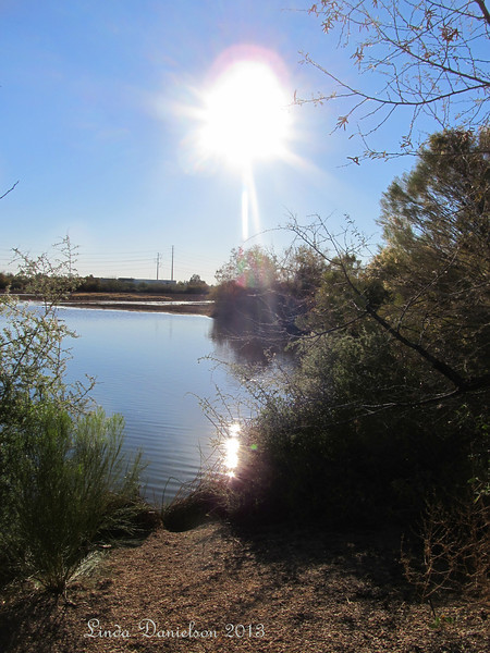 Afternoon sun reflecting on a pond<br /> Riparian Preserve, Gilbert