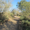 Walking path, <br /> Riparian Preserve, Gilbert