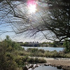 "Topis this week was a study in ""Lens Flare""<br /> Taken at Riparian Preserve"