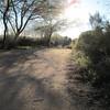 Sunny path at Riparian Preserve, Gilbert