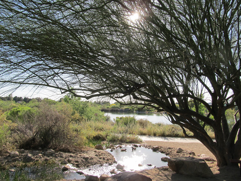 """Topic this week was a study in """"Lens Flare""""<br /> Taken at Riparian Preserve"""