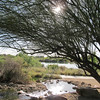"Topic this week was a study in ""Lens Flare""<br /> Taken at Riparian Preserve"