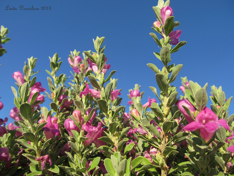More flowering bushes <br /> category:  Plant Life