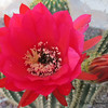 My Cactus is blooming -- yay Mother Earth!