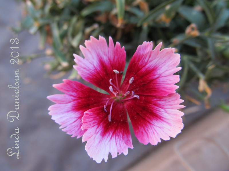 Flower - category Plant Life