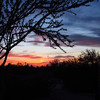 Sunset framed with tree<br /> It was so beautiful watching the sun set at Papago Park
