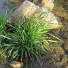 """Green"" was the topic of the week....  water grasses in the creek bed"