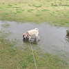If there's a puddle to be found, Sadie will find it! hehehe