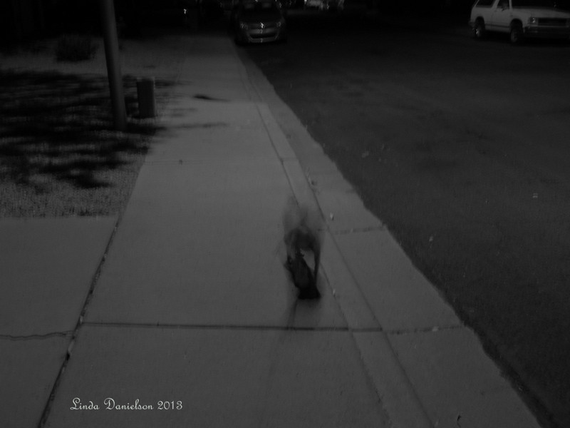 Theme:  On the Street where I live; a study of light in black and white  (Note to self:  Sadie is too wiggly for this!)