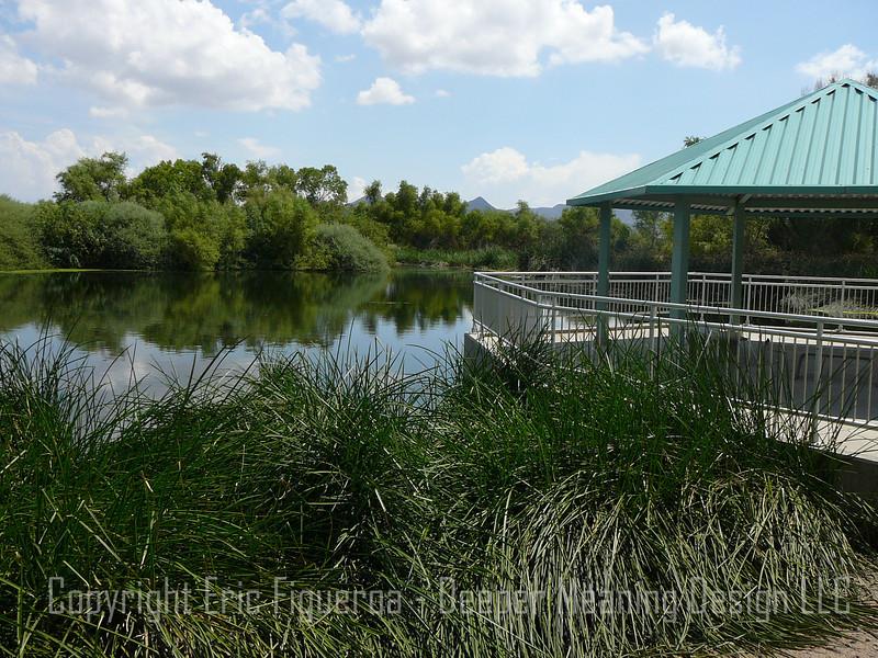 """Sweetwater Wetlands""  Tucson, Arizona"