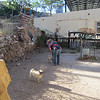 Bisbee dog park