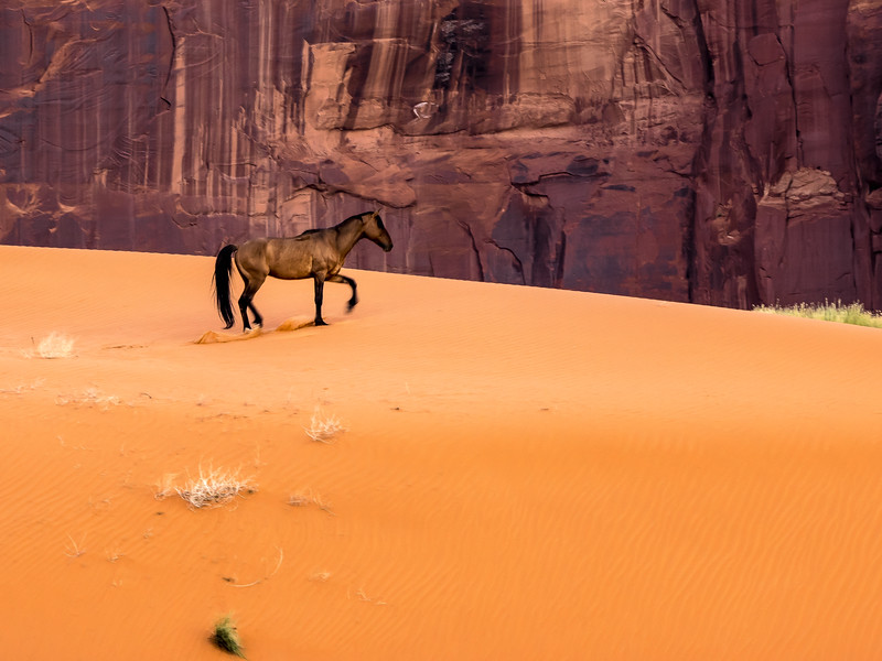 Wild Horse in Monument Valley Arizona