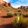 Yucca Blooms in the Early Morning Light of Monument Valley