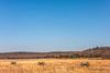 Pea Ridge Nat'l Military Park, Arkansas -- battle anniversary encampment - C3_MG_0004-Edit- 72 ppi