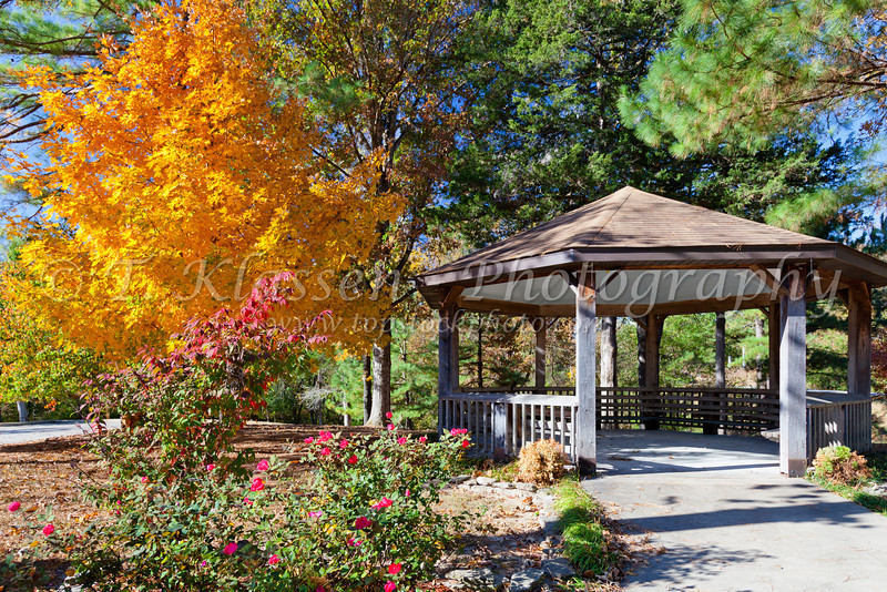 A maple tree exhibiting fall foliage at the Gaston's Resort in Bull Shoals, Arkansas, USA.