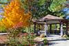 A maple tree exhibiting fall foliage at the Gaston's Resort in Bull Shoals, Arkansas, USA.