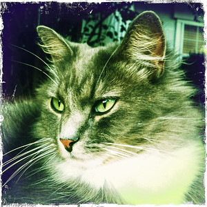 One of our cats at 1886 Crescent Hotel in Eureka Springs