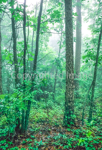 Roadside views along AR 7 south of Russellville, Arkansas, in Ouachita Mountains - 3-Edit - 72 ppi