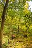 Mountain biker(s) on Slaughter Pen Trails near Bentonville, AR_W7A0568 - 72 ppi-2