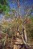 Mountain biker on Womble Trail in Arkansas' Ouachita Mountains - 19 - 72 ppi