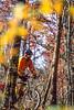 Mountain biker on Womble Trail in Arkansas' Ouachita Mountains - 45 - 72 ppi - soft focus