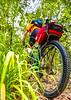 Mountain biker on Womble Trail near AR 298 Trailhead - C2_D5A2007 - 72 ppi-2
