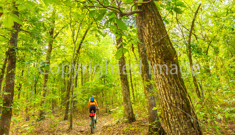 Mountain biker on Womble Trail near AR 298 Trailhead - C2_D5A2051 - 72 ppi-3