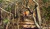 Mountain biker on Womble Trail in Arkansas' Ouachita Mountains - 19 - 72 ppi-3